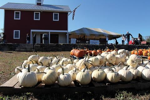 A display of pumpkins at Melick's Cider Mill and Orchard in Oldwick, NJ, where the Eastern Produce Council holds its annual Joe DeLorenzo Family Apple Picking Day.