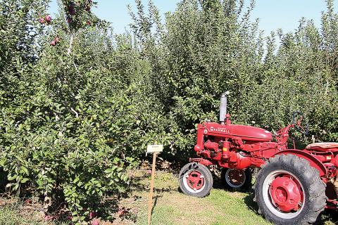 A vintage tractor sits at the edge of an Empire apple orchard at Melick's Cider Mill and Orchard in Oldwick, NJ.