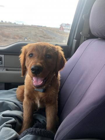 Norman, Cody Anderson's newly hired farm dog for L&L Ag Production.