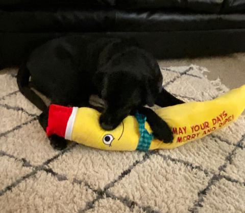 Lucy, the Pro Mark Group chief banana specialist.