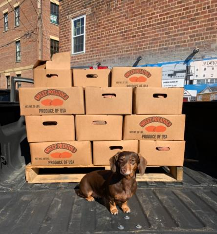 Rebecca Scott, grower accounting and marketing director for Nash Produce, got help from Dori while making a donation of sweet potatoes to a local food bank.
